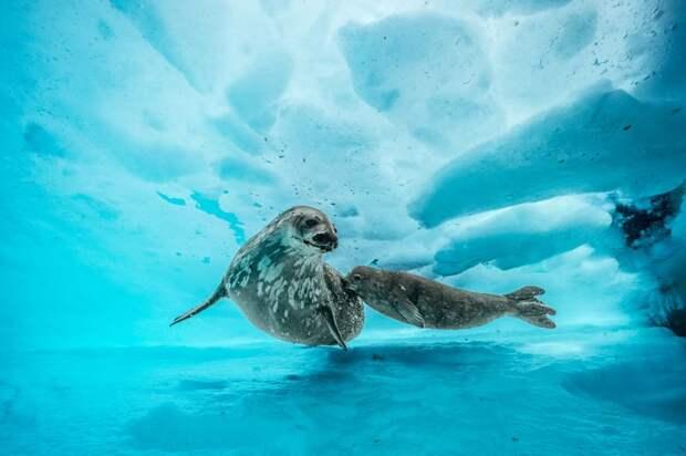 9 удивительных фото, которые показывают жизнь подо льдами Антарктиды