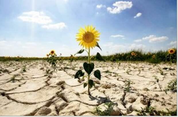 Россию предупредили о тепловой угрозе экономике