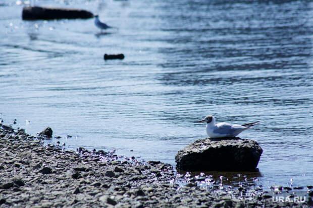 Виды Перми, море, река, птица, чайка