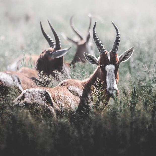 Когда дикая природа вызывает восторг. Фотограф Донал Бойд 12