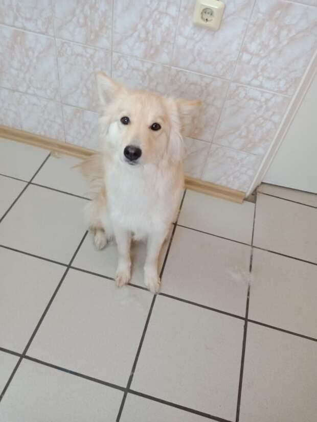 Каждый день у одного и того же подъезда сидела грустная собака. Её бросили хозяева, а она всё ждала…