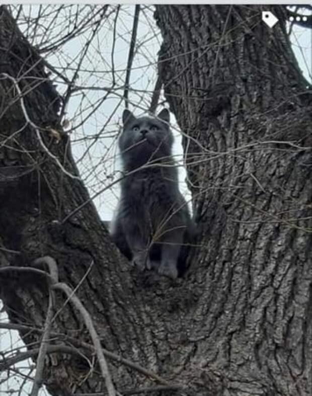 Кошка успела влезть на дерево до того, как нелюди поиздевались над ее семьей. К счастью, ей удалось спастись
