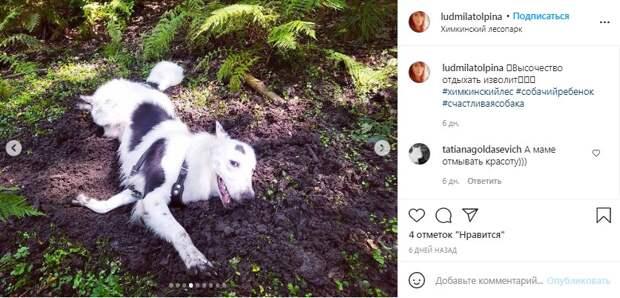 Фото дня: в Химкинском лесопарке обнаружили «спа-салон»