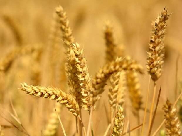 В Палате лордов хотят разрешить редактирование геномов сельскохозяйственных культур