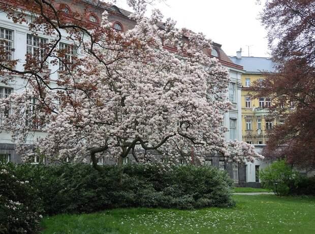 Весна в Карловых Варах!