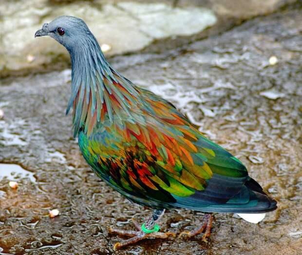 Природа - лучший художник: 40 животных неожиданной расцветки - 1