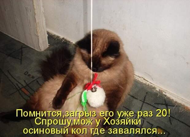 1450431472_kotomatrica-30