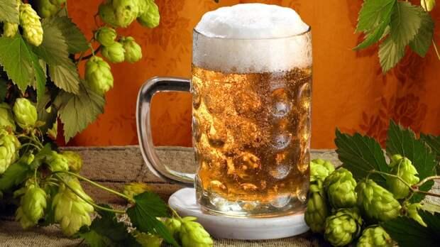Используем пиво в домашнем хозяйстве — полезные советы