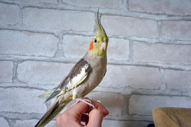 Пользователей сети умилил дуэт пианиста с попугаем
