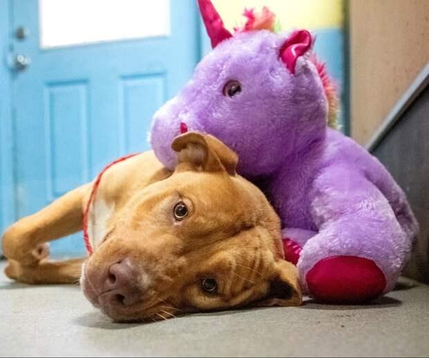Бездомная собака 5 раз воровала из магазина мягкую игрушку, которую потом получила в подарок