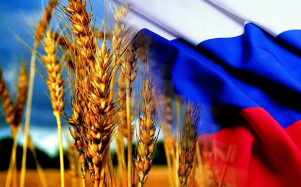В Германии восхитились прогрессом РФ в сфере сельского хозяйства