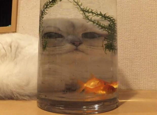 Животные, , которых сфотографировали через разные стеклянные предметы