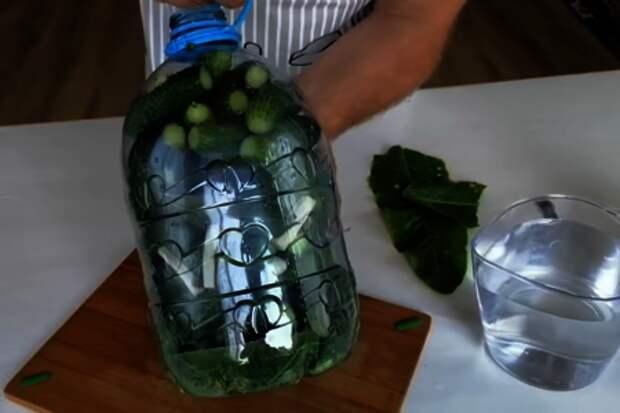 Быстрый способ засолки огурцов на зиму / огурцы в бутылке: фото шаг 3