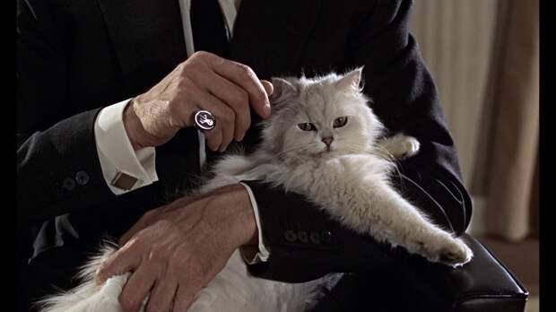 «Кот? Невиновен!» У пушистых хулиганов в Госдуме появился могущественный покровитель