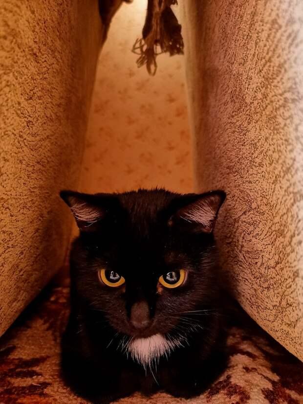Трехнедельный котенок пришел к дому добрых людей, да так и остался жить у них