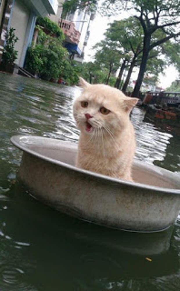 Спасение кота, терпящего бедствие в тазике