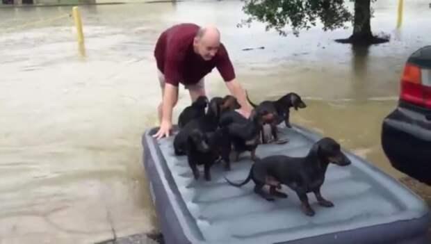 Пока люди спасали свое имущество, он вернулся за соседскими щенками