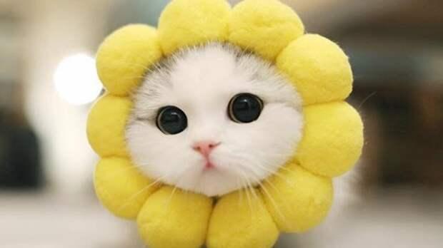 Позитивные и забавные котики с кошечками