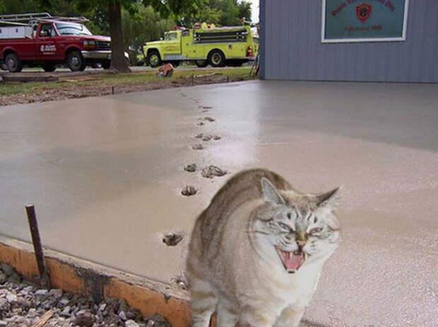funny-tumblr-cats-36-5811ceae880e7__700