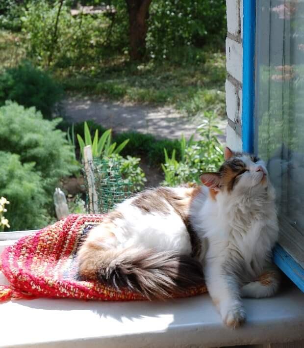 Кошка, как верный пес, ждала моего возвращения из поездки. А я забыла о ней
