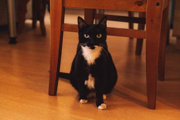 На улице Маршала Вершинина разыскивается «нежная и упитанная» кошка
