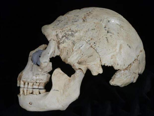 На заре эволюции человек часто помогал себе «третьей рукой»
