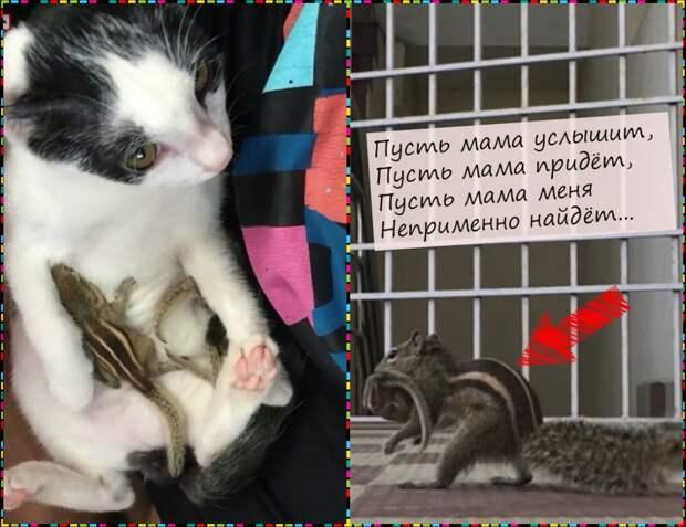 Ураган принёс в дом гнездо с бэби-бурундучками… Их спасала кошка, а потом… нашлась мама!