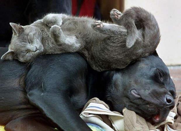 Искусство сна коты, юмор, японцы