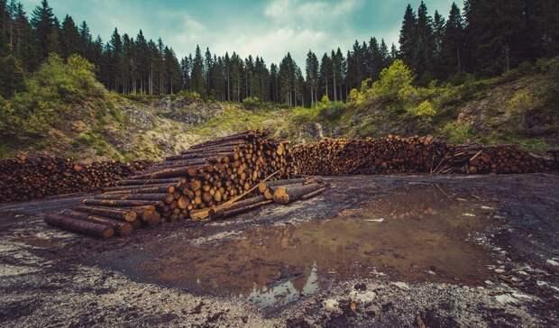 Земельный контроль Московской области обнаружил 8,5 тысяч нарушений за месяц
