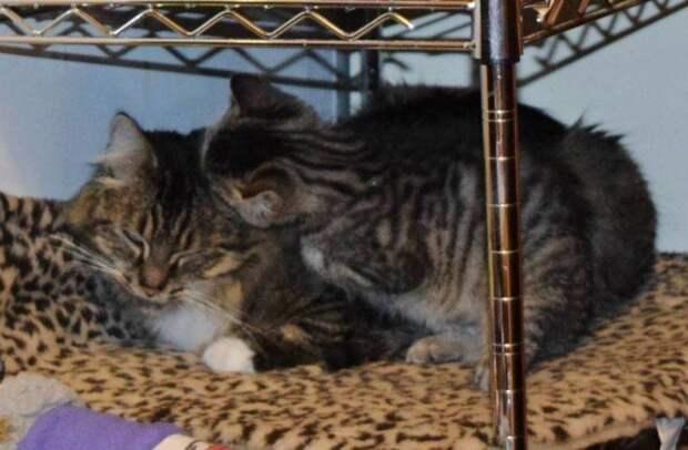 Котенок, родившийся позднее остальных котят на 4 дня, так и остался с мамой неразлучным