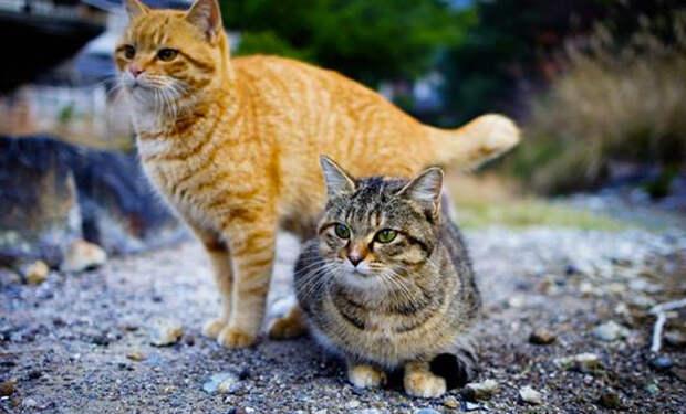 Как кошки чувствуют приближение землетрясения: видео из Японии