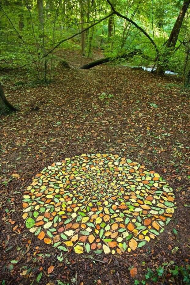 Листья в лесу