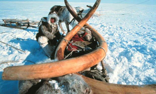 Феномен Сибири: откуда на территории России появилась самая холодная точка Северного Полушария