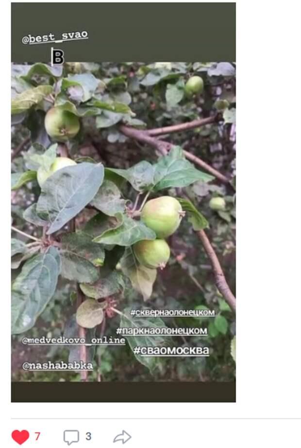 Фото дня: в сквере по Олонецкому проезду появились первые яблоки