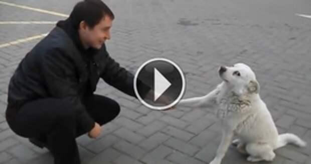 Эта бездомная собака проделала то, что от неё никак не ожидали...