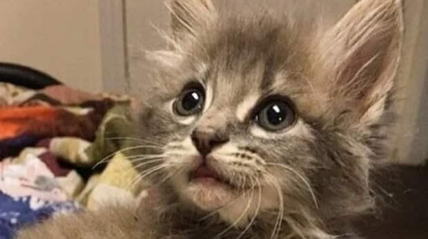 В память о любимом коте люди взяли в дом спасенного котенка, и у него оказалась почти такая же судьба