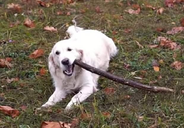 Собака и палка