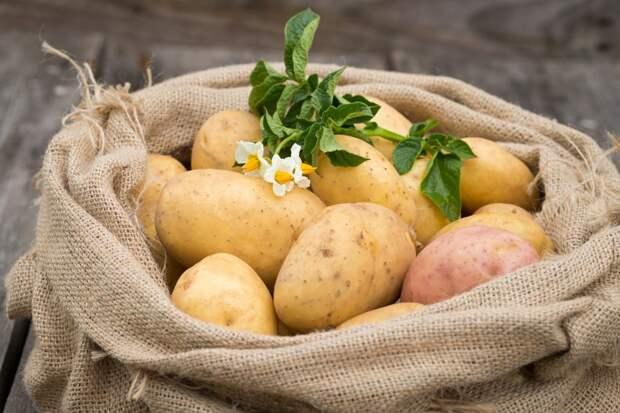 Восемь секретов картофельного урожая