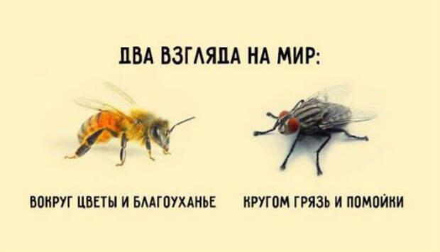 Короткая и мудрая притча о пчеле и мухеКраткая и мудрая притча о двух типах мышления, определяющих нашу судьбу: [[MORE]]Если спросить муху, есть ли в окрестностях цветы, она ответит: — Не видела никаких цветов. Зато навоза в той вот канаве...