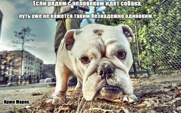 2.  афоризмы, животные, собаки