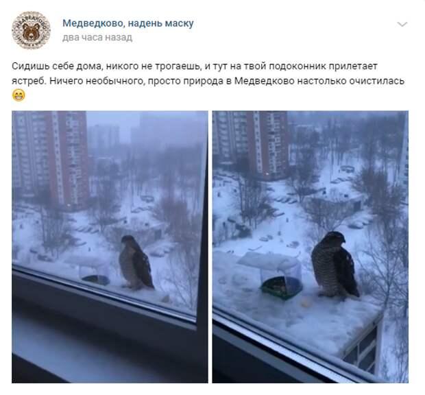 На Шокальского заметили ястреба-перепелятника