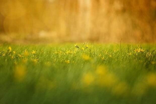 До +31 градуса с грозой ожидается в Рязанской области 19 мая