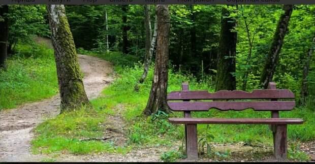 Вы уже гуляли по экотропе в Алешкинском лесу? – новый опрос