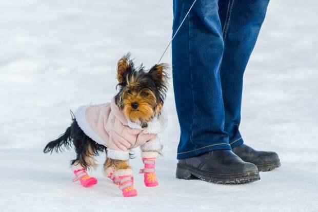 В Гидрометцентре предупредили о морозах и снеге