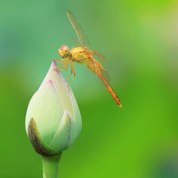 Фото: Zhipeng Wang. Кувшинки