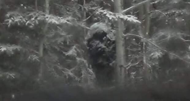 Камера авторегистратора засняла огромного бигфута, скрывающегося среди деревьев (ВИДЕО)