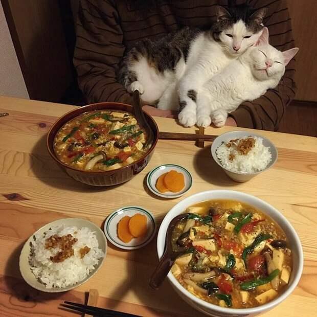 Главное — послеобеденный сон дегустация, еда, животные, кот, коты, позитив, реакция, юмор