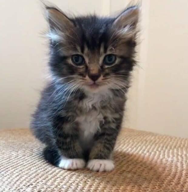 Котят забросили в дупло! Среди едва не погибших малышей был будущий могучий ЛЕВ