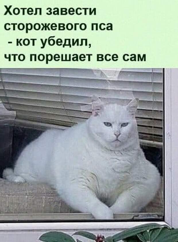 Возможно, это изображение (1 человек, кот и текст «хотел завести сторожевого пса -кот убедил, что порешает все сам»)