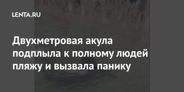 Двухметровая акула подплыла к полному людей пляжу и вызвала панику